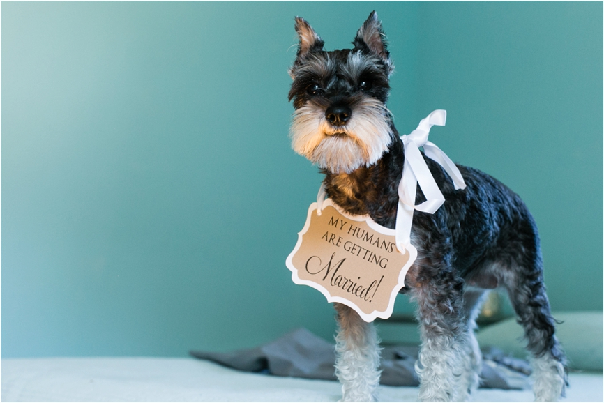 Brides-Best-Friend-Dogs-in-Weddings-CT-Wedding-Photographer-Jeff-Lundstrom-Photography_0002