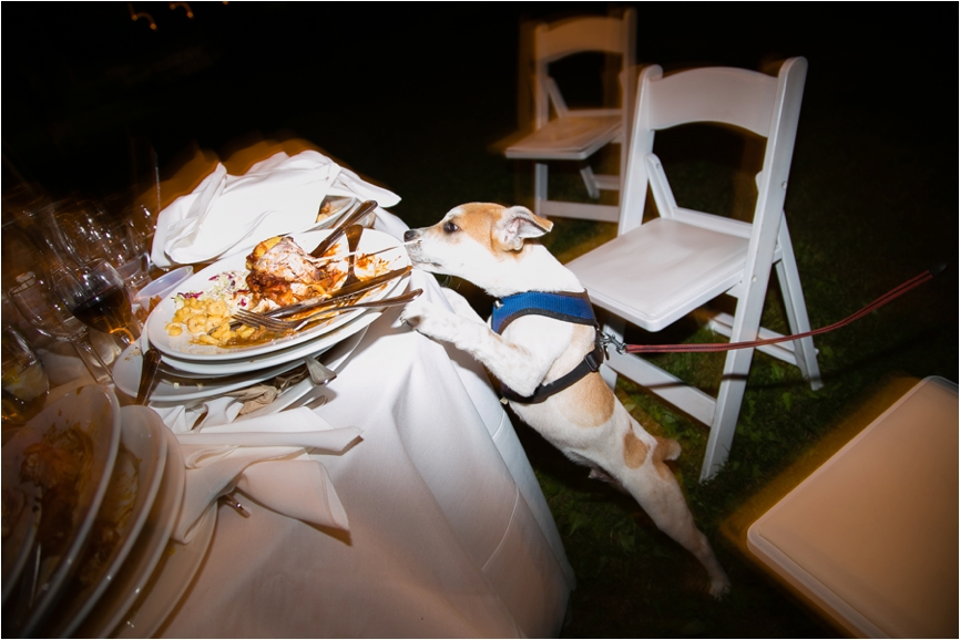 Brides-Best-Friend-Dogs-in-Weddings-CT-Wedding-Photographer-Jeff-Lundstrom-Photography_0008